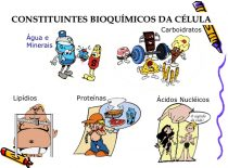 Carboidratos, Lipídios, Proteínas E Enzimas