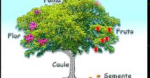 7o Ano – Reconhecimento Raiz, Caule E Folhas (Botânica)